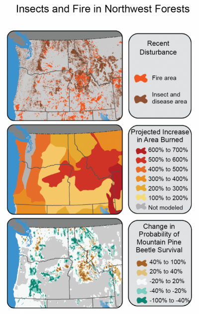 (Left) Insects and fire have cumulatively affected large areas of the Northwest and are projected to be the dominant drivers of forest change in the near future. Map shows areas recently burned (1984 to 2008) or affected by insects or disease (1997  to 2008). (Right) Map indicates the increases in area burned that would result from the regional temperature and precipitation changes associated with a 2.2 degree F global warming across areas that share broad climatic and vegetation characteristics. Local impacts will vary greatly within these broad areas with sensitivity of fuels to climate.